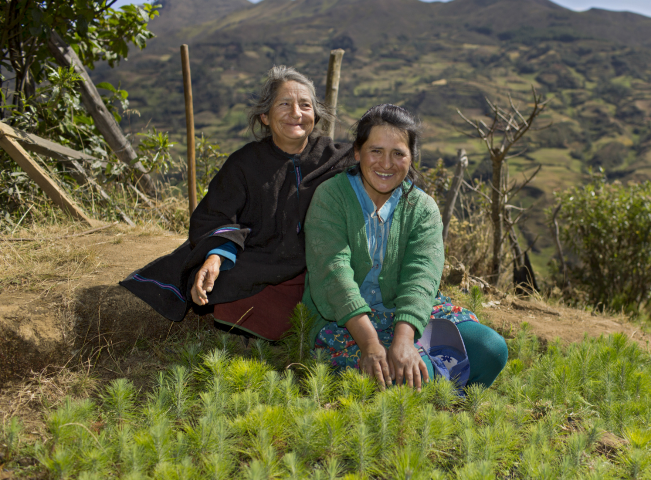 Two cocoa farmers planting trees in Peru