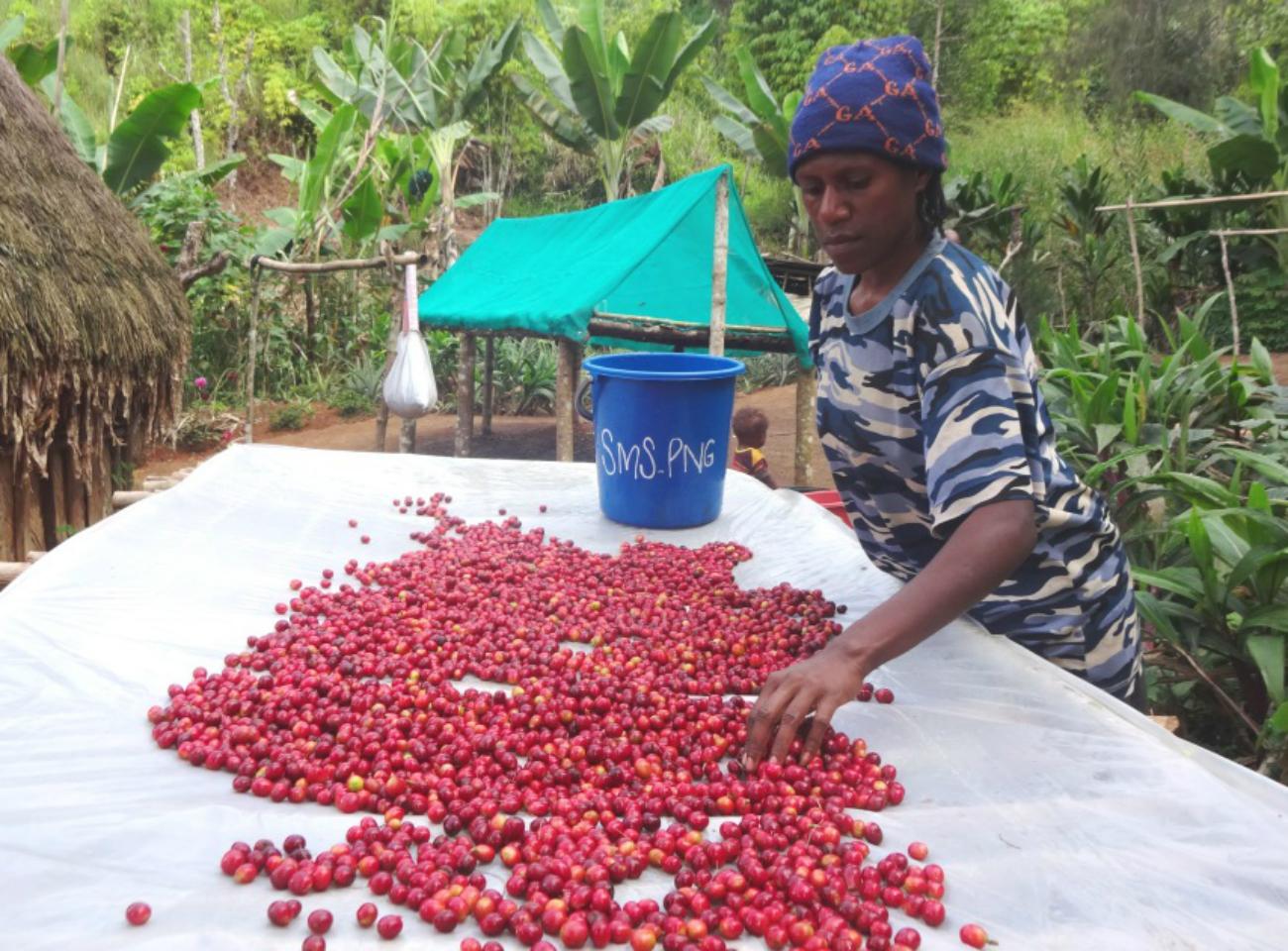 Fairtrade farming sorting cherries