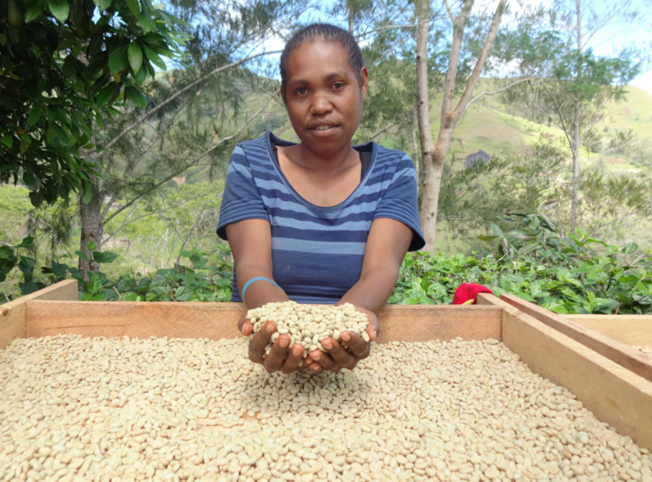 A woman farmer in Papua New Guinea with coffee parchment