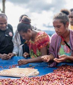 Coffee farmers sorting coffee cherries